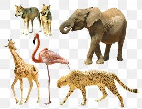 Animal - Giraffe Cheetah Tiger Dog Animal PNG