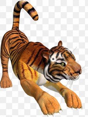 Tiger - Tiger Lion Presentation Animal Clip Art PNG