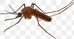Mosquitohd - Mosquito Control Female Zika Virus Yellow Fever Mosquito PNG