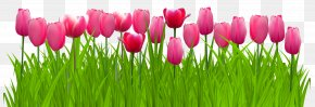 Grass With Pink Tulips Clip Art Image - Parrot Tulips Graphics Clip Art PNG