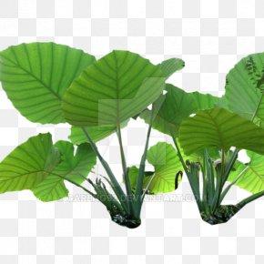 Plant - Nelumbo Nucifera Colocasia Gigantea Plant Stem Leaf PNG