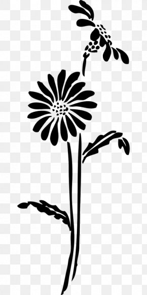 Daisy Family Herbaceous Plant - Drawing Of Family PNG