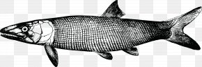 Fish - Guide To The Study Of Fishes Sardine Drawing The Head And Hands PNG