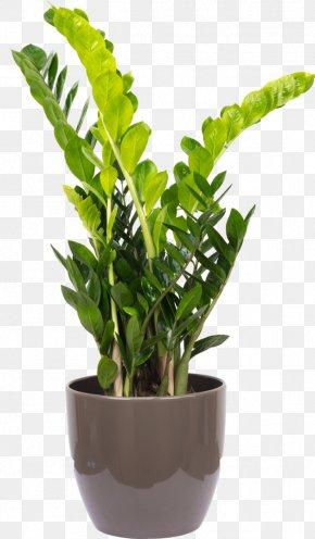 Flowerbox - Zamioculcas Zamiifolia Houseplant Flowerpot Vascular Plant Areca Palm PNG