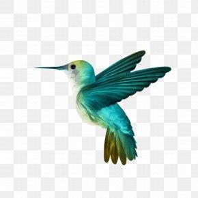 Hummingbird - Hummingbird Wallpaper PNG