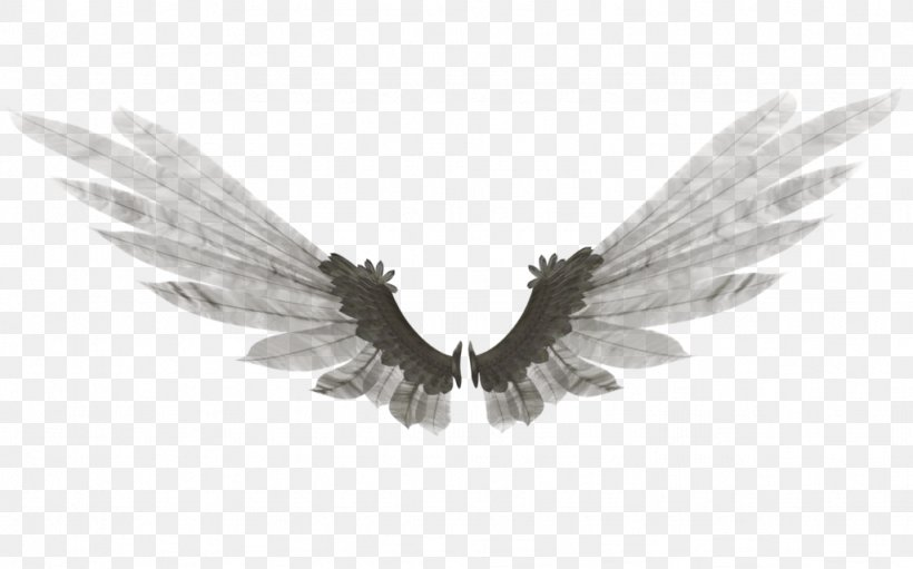 Wing DeviantArt Feather Bethor Digital Art, PNG, 1024x639px, Wing, Angel, August 21, Beak, Bethor Download Free