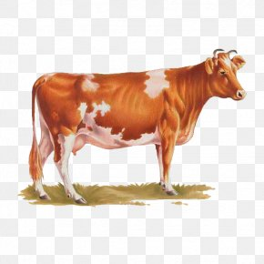 Bull - Dairy Cattle Ayrshire Cattle Calf Texas Longhorn Bull PNG