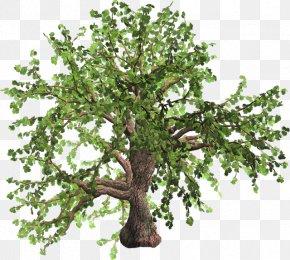 Spring Tree - Tree Oak Plant Fashion Spring PNG