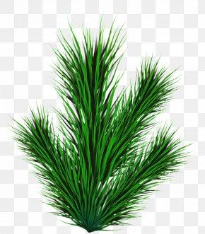 Shrub Palm Tree - Palm Tree Background PNG