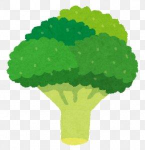 Broccoli - Broccoli Sulforaphane Cauliflower Vegetable Food PNG