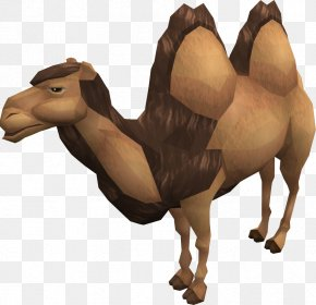 Camel Images - Dromedary RuneScape Bactrian Camel Wiki Horse PNG