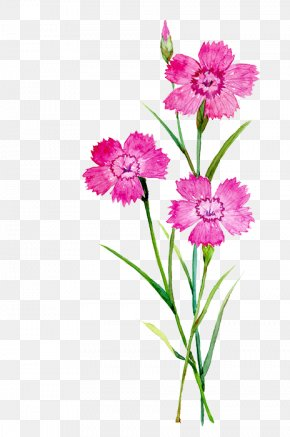 Watercolor Flowers - Carnation Flower Watercolor Painting Illustration PNG