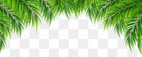 Palm Leaves Decor Clip Art Image - Arecaceae Leaf Clip Art PNG