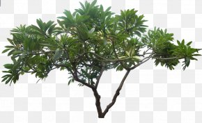 Jungle Tree Picture - Image Resolution PNG