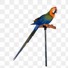 Parrot - Amazon Parrot Bird Cockatiel Toy PNG