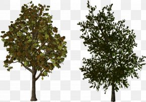 Trees - Brush Painting Download PNG
