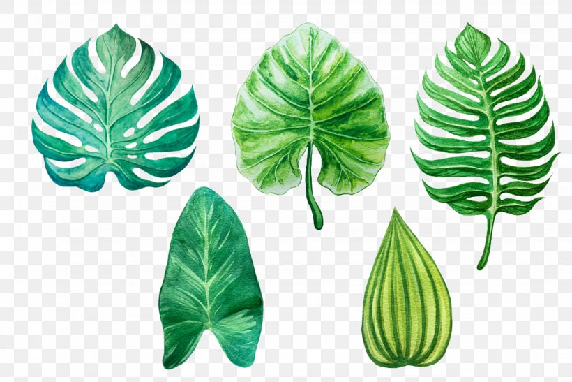Leaf Watercolor Painting Drawing, PNG, 2048x1367px, Leaf, Art, Art Museum, Drawing, Image Tracing Download Free