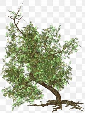 Tree Image - Sageretia Theezans Twig Leaf Shrub Nature PNG