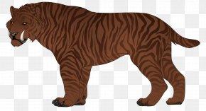 Tiger - Tiger Lion Cat Cougar Dog PNG
