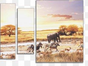 Lion - Savanna Desktop Wallpaper African Bush Elephant Lion Elephantidae PNG