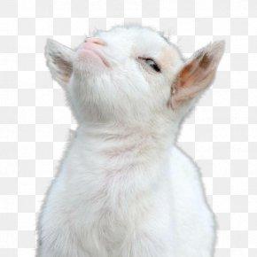 Goat - Cat Goat Animal PNG