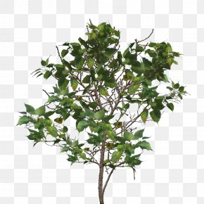 Tree Branch Image - Tree Branch Twig PNG