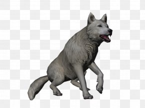 Wolf - Saarloos Wolfdog Kunming Wolfdog Czechoslovakian Wolfdog Arctic Hare Alaskan Tundra Wolf PNG