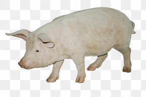 Pig Image - Cattle Domestic Pig Wildlife Fauna Livestock PNG