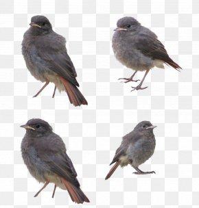 Birds - Bird Flight PNG