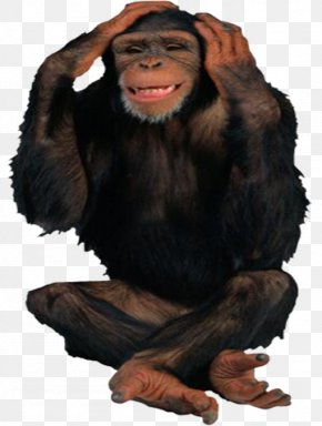 Lonely Orangutan - Common Chimpanzee Gorilla Orangutan Ape PNG