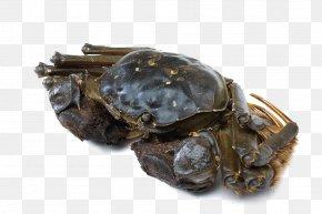 Crabs - Seafood Crab Download PNG