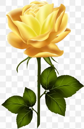 Yellow Rose With Stem Clip Art - Garden Roses Clip Art PNG