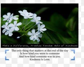 Ramana Maharshi - Kindness Desktop Wallpaper Medicine Love Wallpaper PNG