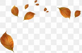 Withered Autumn Leaves - Leaf Autumn PNG
