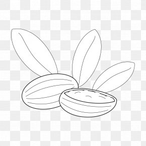 Butterfly - Butterfly /m/02csf Line Art Drawing Graphics PNG