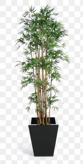 Green Bamboo Potted Buckle - Weeping Fig Tree Houseplant Banyan PNG