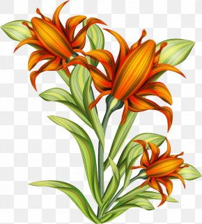 Plant Flowers - Drawing Line Art Painting Clip Art PNG