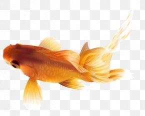 Undewater - Black Telescope Common Goldfish Shukin Common Carp PNG