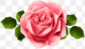 Red Rose Transparent Clip Art - Rose Clip Art PNG