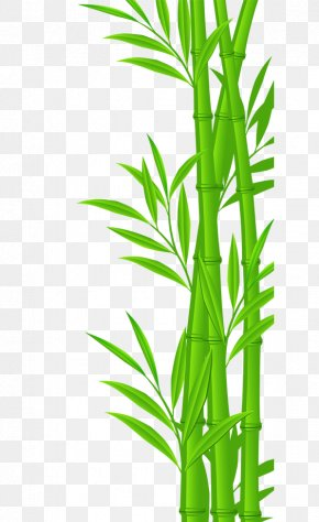 Bamboo - Bamboo Euclidean Vector Illustration PNG
