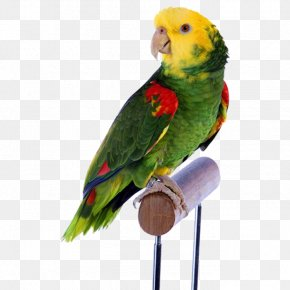 Yellow Head Green Parrot - Bird Parrot Cockatiel Dog Budgerigar PNG
