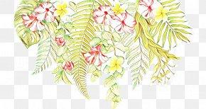 Vascular Plant Flower - Floral Petal PNG