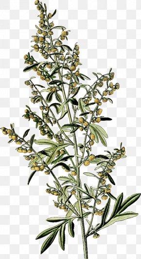 Herbaceous Plant Plant Stem - Flower Plant Subshrub Plant Stem Herbaceous Plant PNG
