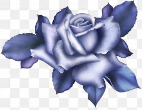 Blue Flower - Beach Rose Blue Rose Flower Color PNG
