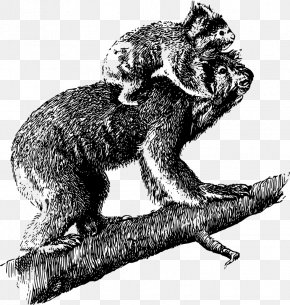Marsupial - Koala Australia T-shirt Marsupial Clip Art PNG