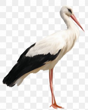 Stork - White Stork Icon PNG