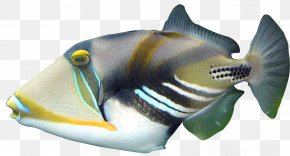 Tropical Fish - Lagoon Triggerfish Coral Reef Clown Triggerfish PNG