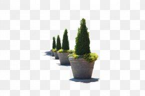 Flower Pot - Flowerpot Stock Photography PNG