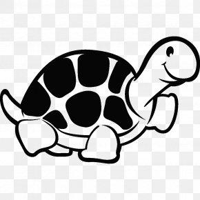 Turtle - Chinese Softshell Turtle Animal 화진초등학교 PNG