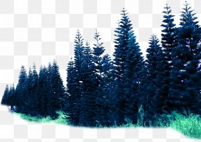 Environmental Rendering Effect Forest Material - Spruce Forest Rendering PNG